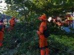 proses-evakuasi-pohon-tumbang.jpg