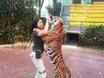 rosalinda-22-keeper-atau-pawang-harimau-di-taman-safari-bogor.jpg