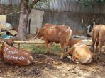 rph-pd-dharma-jaya-cakung_20180820_174218.jpg