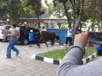 sapi-sumbangan-sekretaris-daerah-kota-tangerang-dadi-budaeri_20180822_102057.jpg