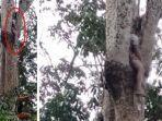 seorang-pria-meninggal-di-atas-pohon-di-kawasan-aceh-utara.jpg