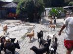 suasana-tempat-penampungan-pejaten-shelter-rumah-bagi-anjing-1.jpg