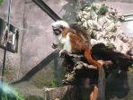 tamarin-berkepala-kapas-salah-satu-jenis-primata-terkecil-ada-di-jakarta-aquarium.jpg