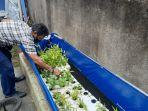tanaman-hidroponik-dan-kolam-lele-yang-dikembangkan-di-kampung-rawapasung-2.jpg