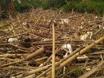 tumpukan-sampah-bambu-di-bendungan-koja-kali-cikeas-jatiasih-kota-bekasi.jpg