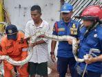 ular-sanca-sepanjang-tiga-meter-di-jakarta-barat.jpg