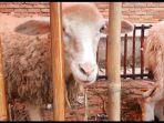 wahana-di-dkandang-amazing-farm-depok.jpg