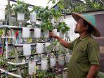 warga-cipete-utara-ahmad-fanani-memiliki-urban-farming-kamis-2412019.jpg