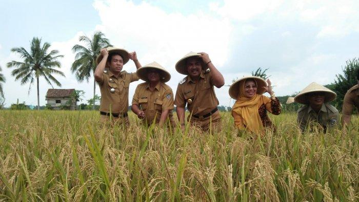 Ini Dia Yang Dimaksud Dengan Gabah, Jadi Makanan Pokok Masyarakat Indonesia