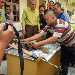 Lagi, Polda dan BKSDA Jambi Ringkus Penjual Kulit dan Tulang Harimau