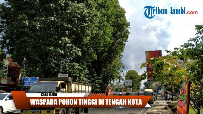 Awas, Sulit Memprediksi Pohon Rawan Tumbang, DLH Imbau Jauhi Pohon saat Hujan dan Angin Kencang