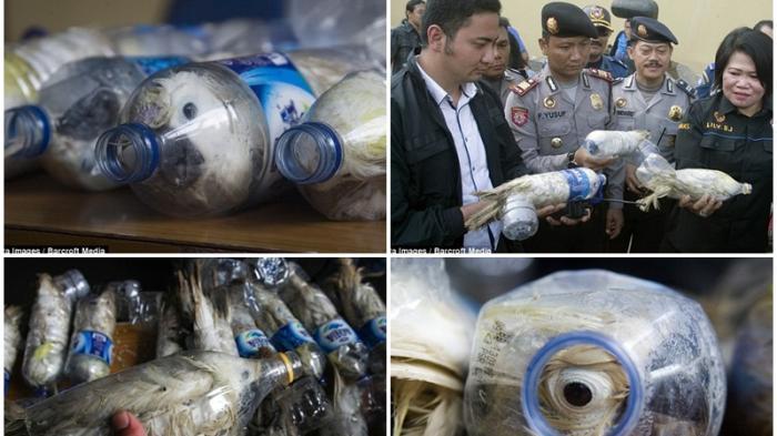Kakatua Langka dari Indonesia Dimasukkan dalam Botol untuk Diselundupkan