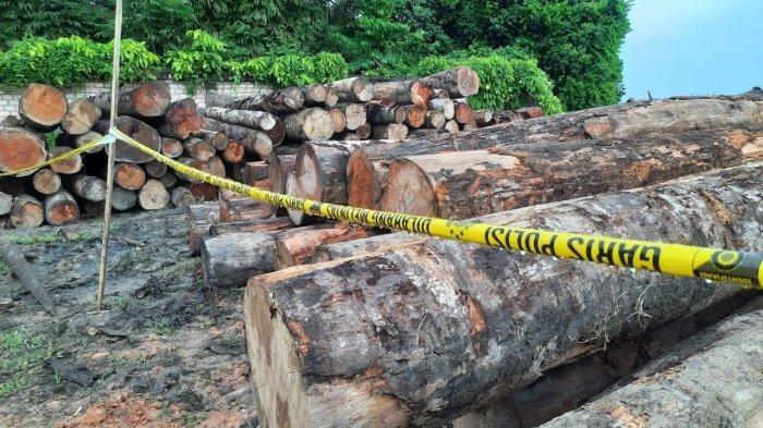 Tiga Warga Sungai Gelam Ditangkap Polisi di Tengah Hutan, Ketangkap Basah Lakukan Illegal Logging