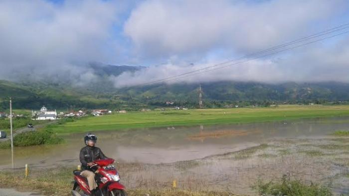 Ratusan Hektare Sawah Terendam di Kerinci dan Sungai Penuh