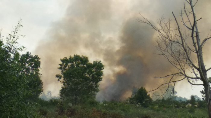 Ini Kabupaten Rawan Kebakaran Hutan dan Lahan menurut BPBD Jambi
