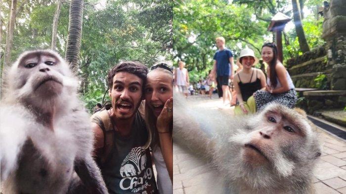 Foto Viral Monyet Selfie Bareng Wisatawan di Bali, Minat Berkunjung?