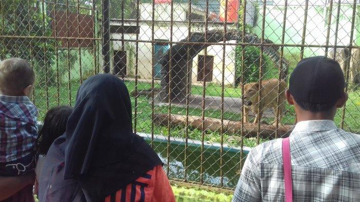 Libur Lebaran, Taman Rimba Zoo Dipadati Ribuan Pengunjung dari Luar Jambi