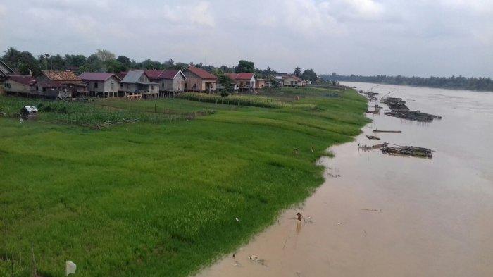 22 Hektare Lahan Petani Padi Alami Gagal Panen, Terjadi di Satu Kelurahan di Seberang Kota Jambi