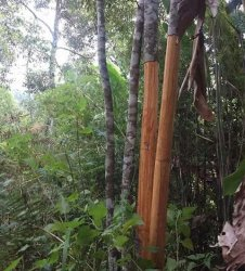 Ingin Jadi Sentra Kulit Kayu Manis, Bupati Adirozal Minta Setiap Kantor Camat Ada Pohon Kayu Manis