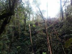 Kasus Perambahan Hutan di Kawasan TNKS - Penyidik Mintai Keterangan Ahli