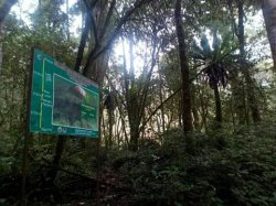 2.000 Ha Hutan di Gunung Kerinci Telah Dirambah