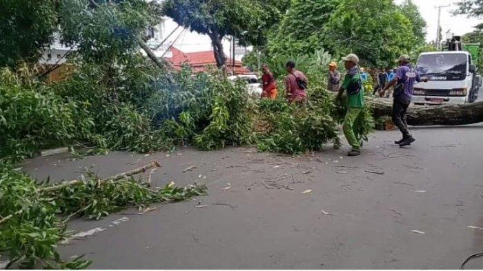 Hujan Angin Tiba-tiba Call Center 112 Tak Dapat Laporan Bantuan, DLH Dapat Dua Laporan Pohon Tumbang