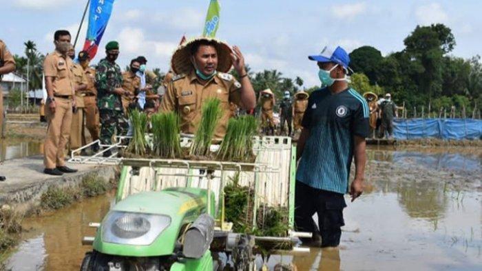 Melalui P2DK, 1.647 Hektar Sawah di Sarolangun Digarap untuk Ketahanan Pangan