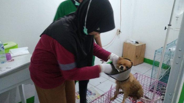 Ini Manfaat Penting Vaksin Kucing dan Anjing Peliharaan