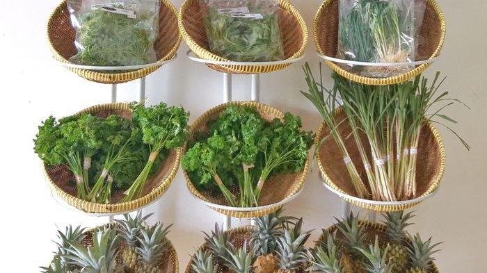 Cara mudah membedakan sayuran organik dengan sayuran lainnya