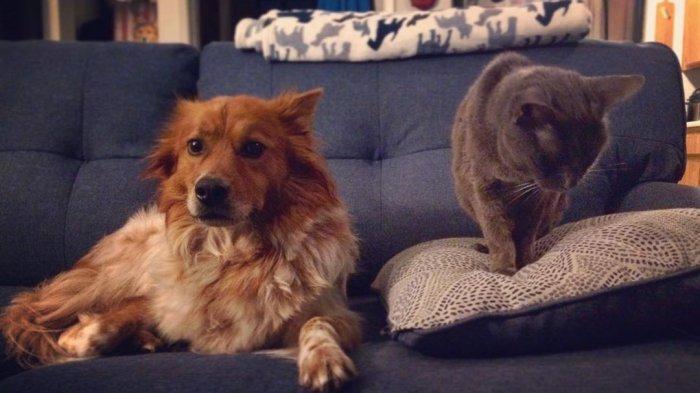 Kenapa Anjing dan Kucing Tak Pernah Akur Bak Musuh Abadi?