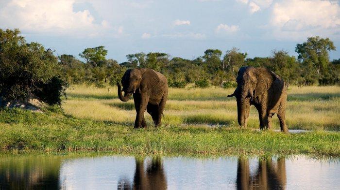 Ingin Liburan? 8 Destinasi di Zimbabwe Ini Patut Dipertimbangkan!