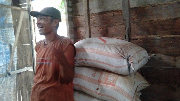 Usaha Penggilingan Padi Terancam Gulung Tikar, Banyak Petani Tanjabtim Tinggalkan Sawah
