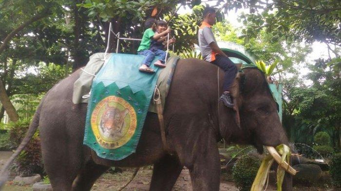 Gajah Taman Rimba