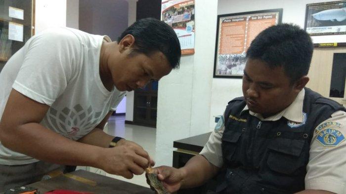 Anak Buaya Muara yang Ditangkap di Bandara Sulthan Thaha, akan Dilepas Liarkan Ke Tanjab Timur