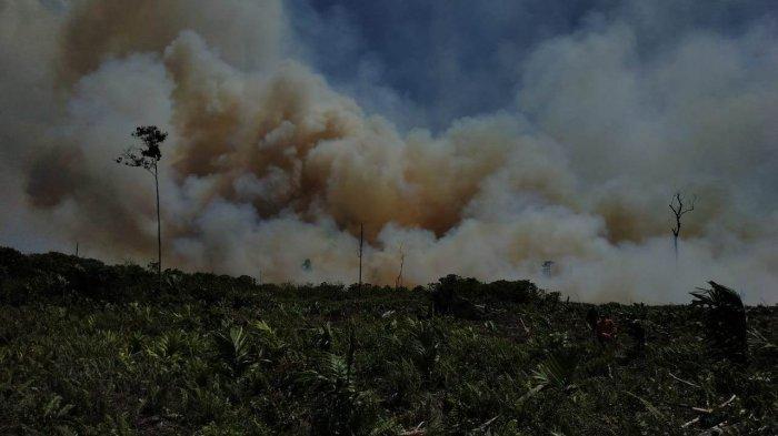 Selama 1 Bulan, 126 Ribu Hektare Lahan di Jambi Terbakar, Kawasan Berizin yang Banyak Terbakar