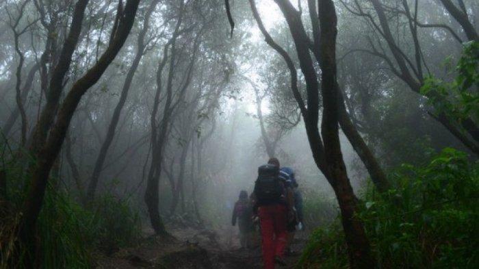 Hutan - hutan ini Terkenal Angker, Ceritanya Bikin Merinding