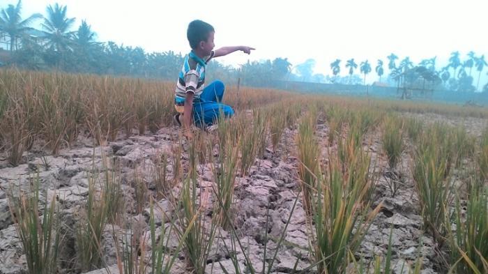TERJAWAB Musim Kemarau Tapi Suhu di Sejumlah Kota Indonesia Terasa Dingin, BMKG Ungkap Penyebabnya