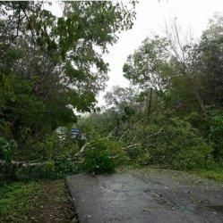 Satu Rumah dan Satu Pohon Roboh di Bungo , BPBD Imbau Warga Waspada