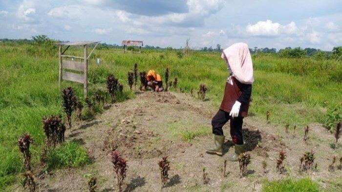 Distribusi Pupuk Subsidi di Sarolangun Bermasalah, Pemkab Sarolangun Akan Perketat Pengawasan