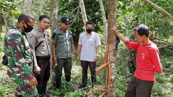 Beruang Berkeliaran di Kebun, Petani di Singkut Sarolangun Diminta Tak Pergi ke Kebun