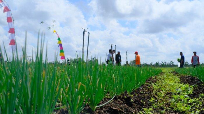 BRGM Targetkan Restorasi Gambut 236.427 Hektare di Jambi Hingga 2024