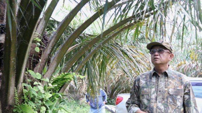 Cek Endra Manfaatkan Waktu Libur Melihat Kondisi Kebun