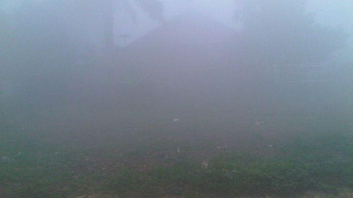 Walhi Jambi Usulkan Status Kabut Asap jadi Siaga Darurat Nasional