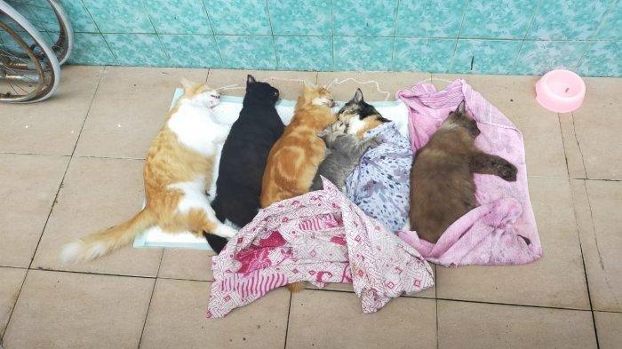 Majikan Sadis yang Tahan Gaji ART Lalu Paksa Makan Kotoran Kucing, Kini Jadi Tersangka
