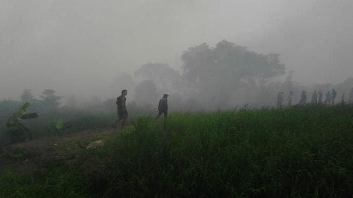 Walhi: Biasa Usai Pilkada Izin Konsesi Hutan Meningkat Tajam