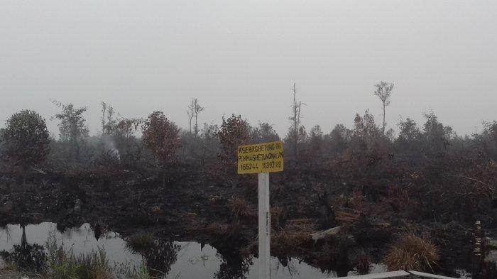 Hujan Tak Sampai ke Desa Puding, Kebakaran di Lahan Gambut Terus Terjadi