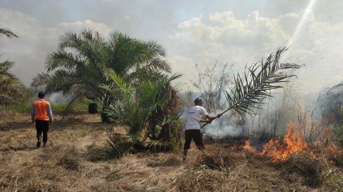 24 Hektare Lahan di Muarojambi Terbakar, Sekarang Petugas BPBD Masih Berjibaku Padamkan Api