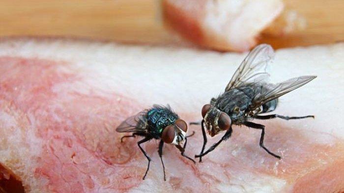Kisah Lalat Ini Memberi Contoh Mengapa Gagal Meski Sudah Kerja Keras, Hanya Butuh Sedikit Kecerdasan