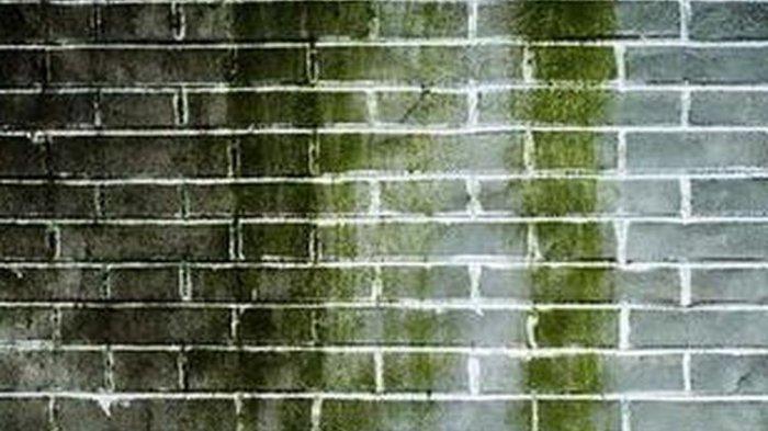 Lumut di dinding