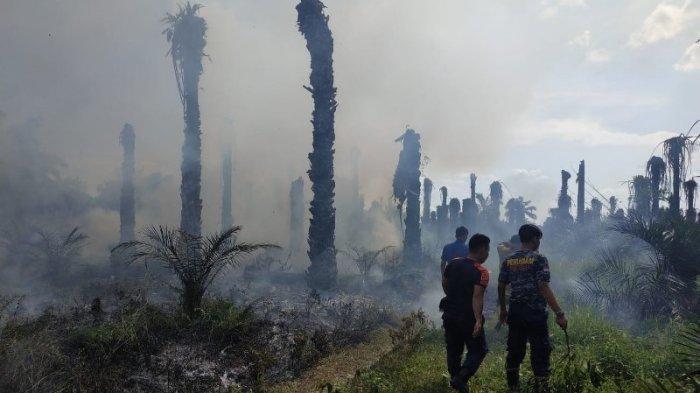40 Menit Padamkan Kebakaran Lahan di Bungo, Satu Unit Damkar Habiskan 5 Ribu Liter Air